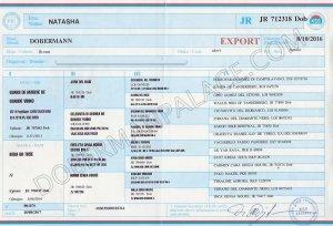 Imported European Doberman