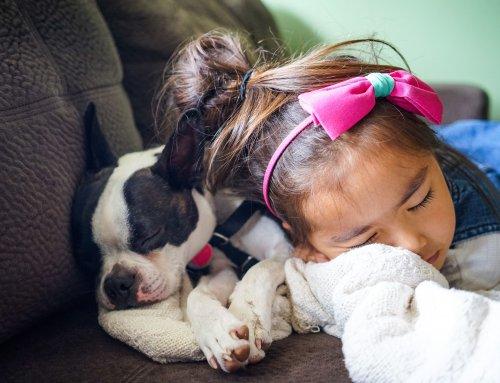 Children's Dangerous Behavior Towards A Puppy