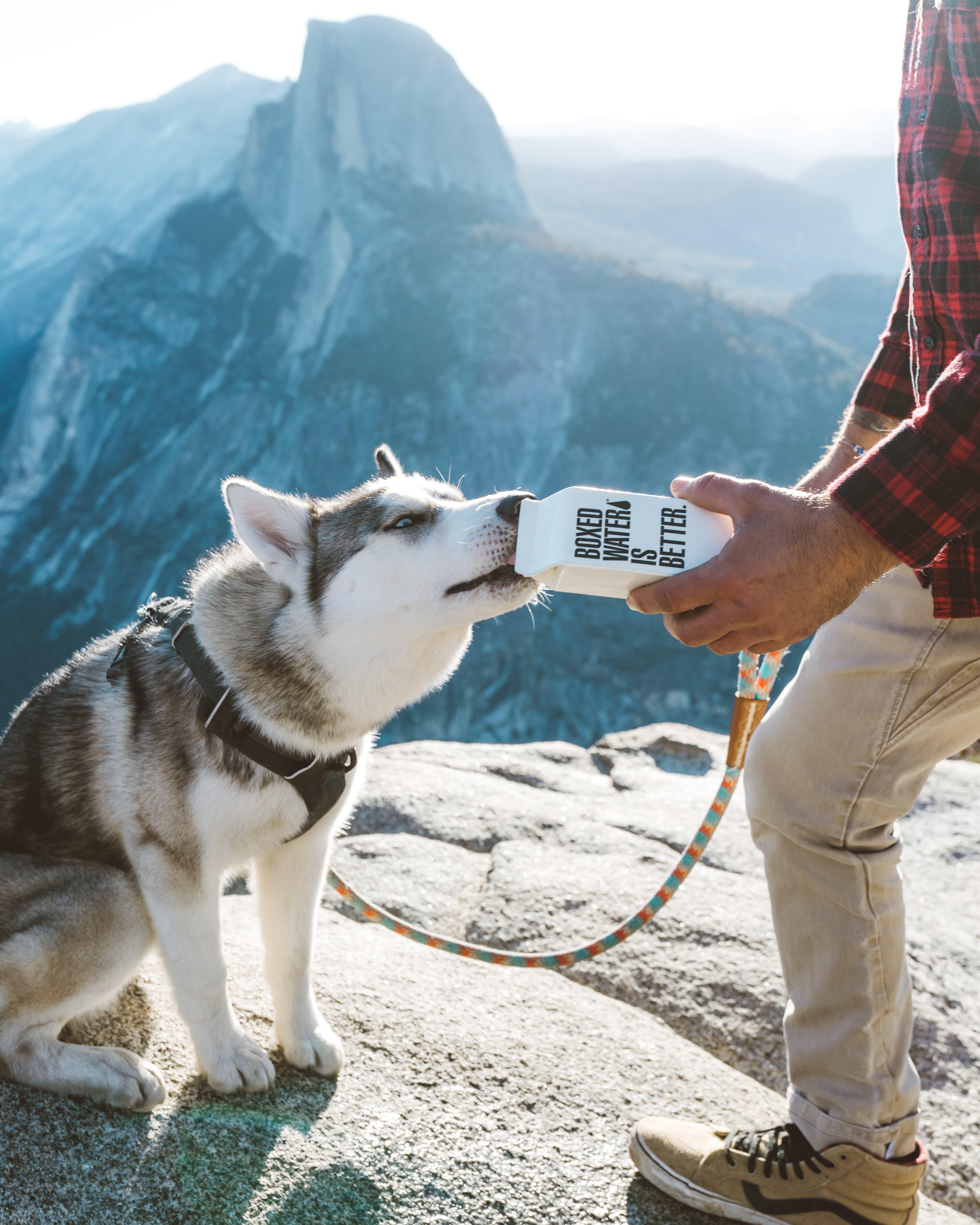 summer tips for puppies - siberian husky- husky palace-min